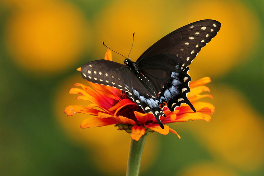 caterpillar-moth-butterfly-before-after-metamorphosis-16-2