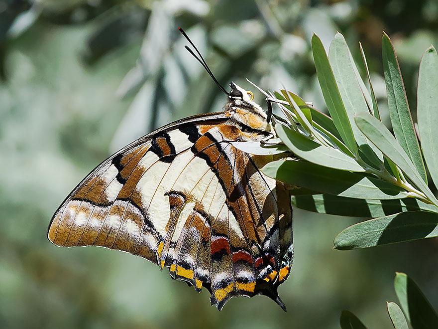 caterpillar-moth-butterfly-before-after-metamorphosis-18-2