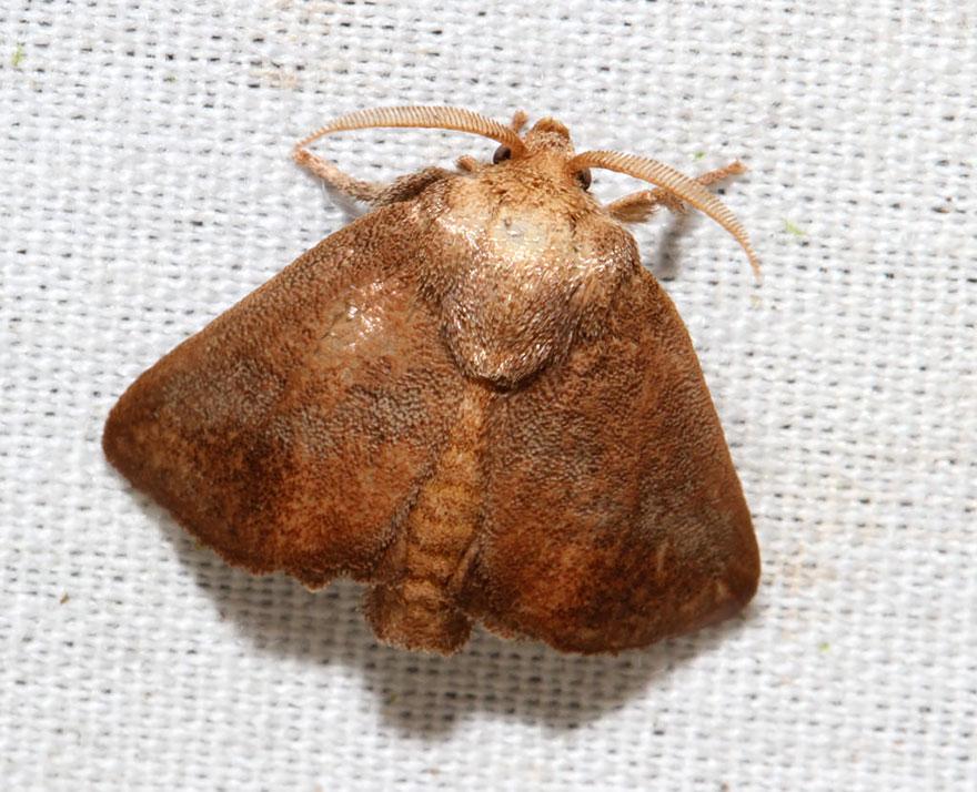 caterpillar-moth-butterfly-before-after-metamorphosis-25