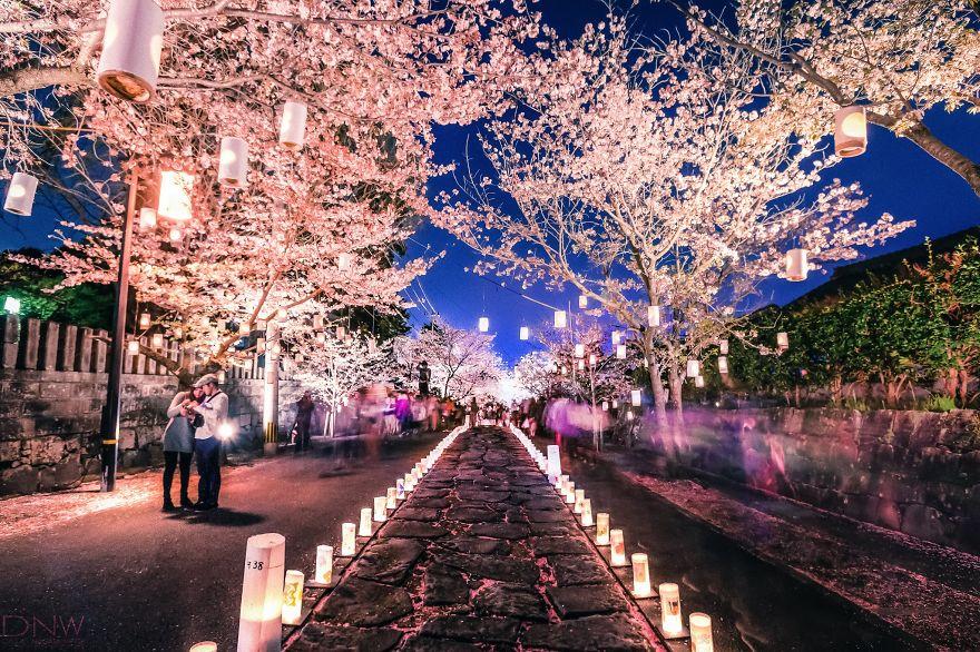 Весенний фестиваль цветения, Япония