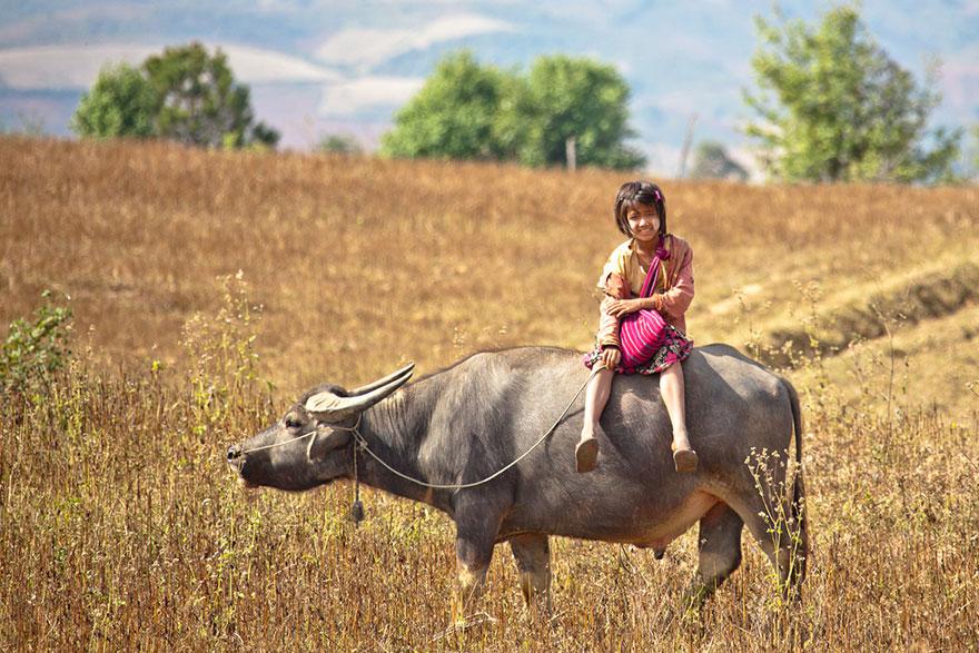 Девочка преодолевает дорогу в школу верхом на быке, Мьянма