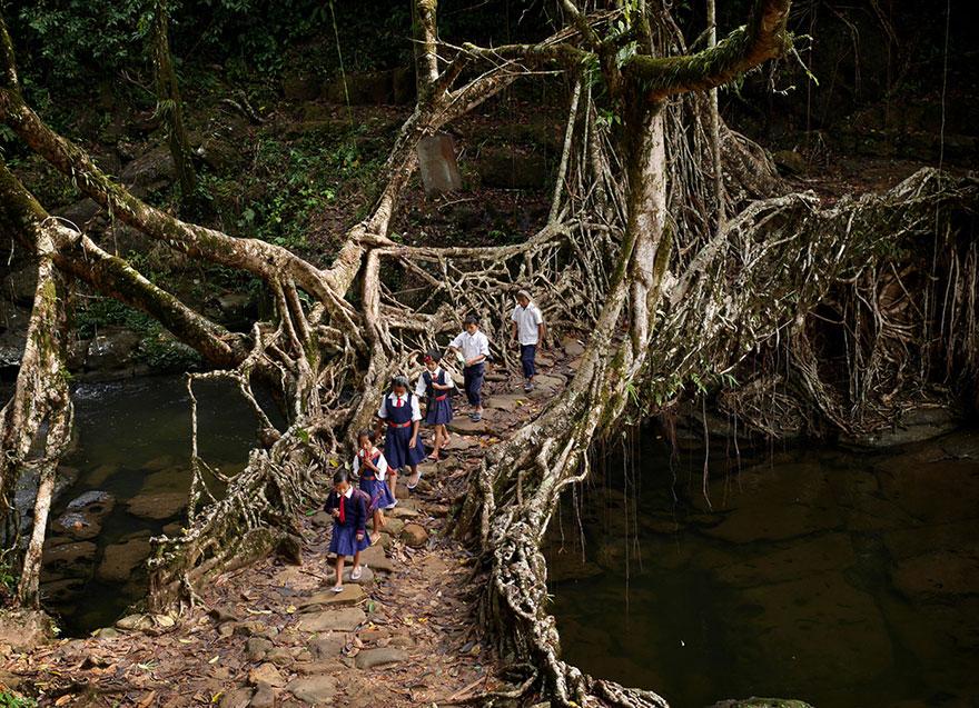 Дети преодолевают подвесной мост из корней фикуса, Индия