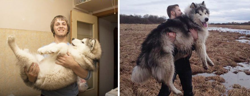 dogs-before-and-after-40