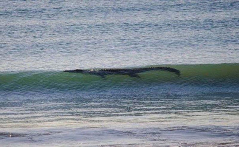 Серферам также следует остерегаться крокодилов