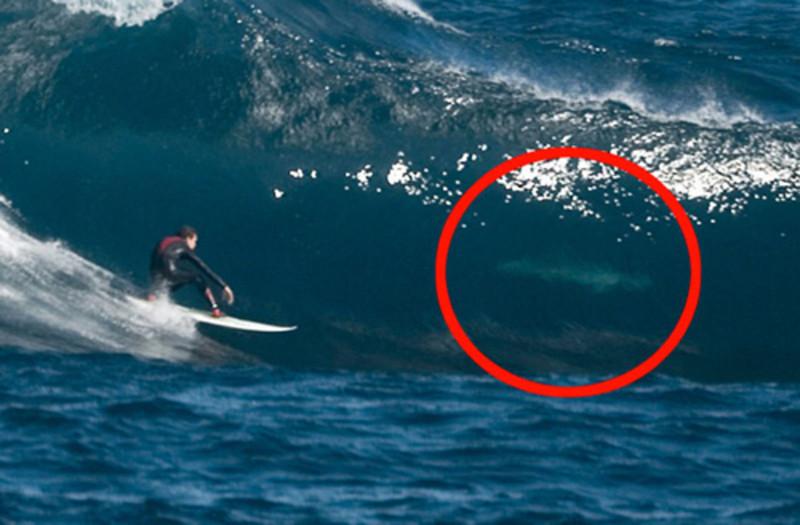 Зато акулы пугают всех остальных. Особенно серферов