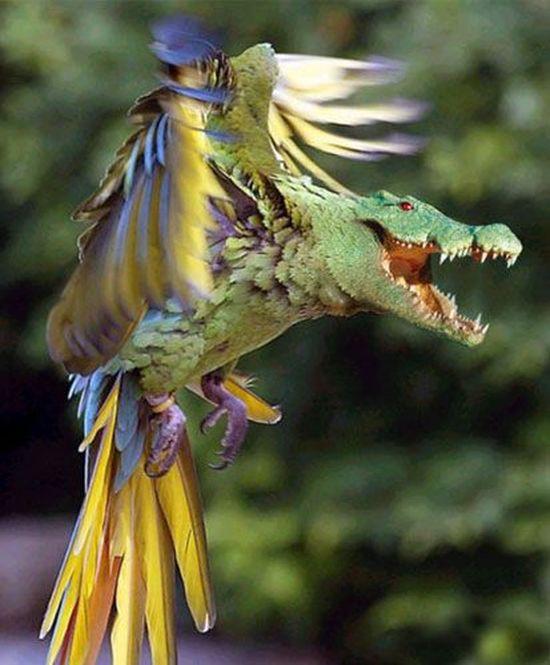 Попугатор