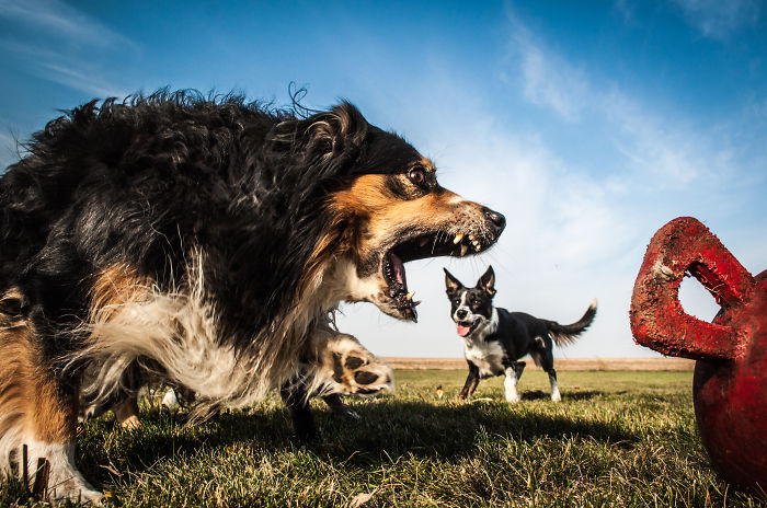optical-illusion-giant-dog-31__700