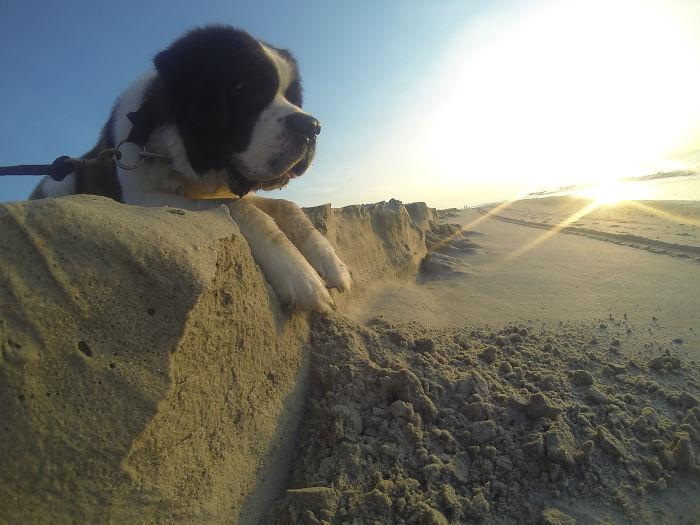optical-illusion-giant-dog-81__700
