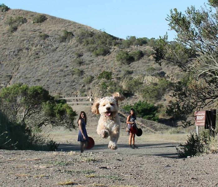 Идеально снятые кадры, превратившие собак в великанов