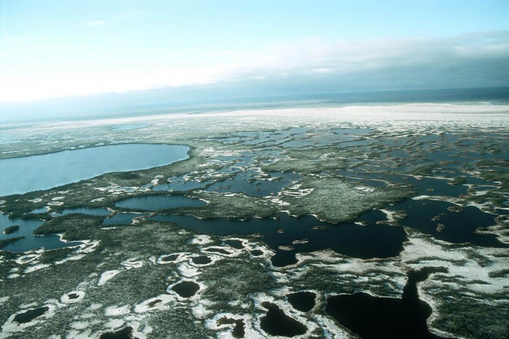 Большие Васюганские болота в Западной Сибири
