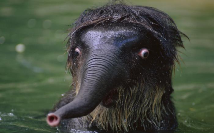 shocked-astonished-animals-photography-2__700