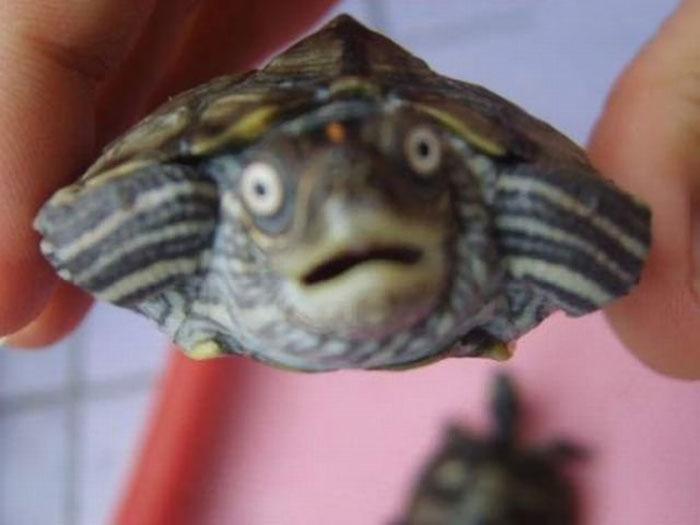 shocked-astonished-animals-photography-5__700