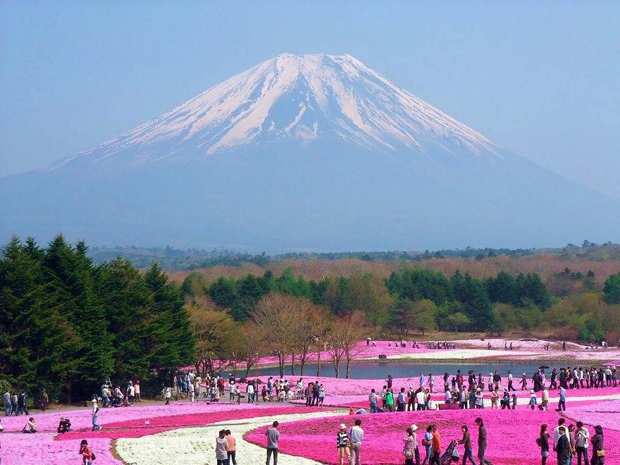 Фестиваль Фудзи Сибаджакура, Япония