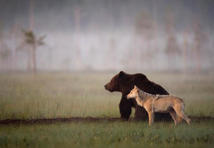 Неожиданный союз лютых хищников