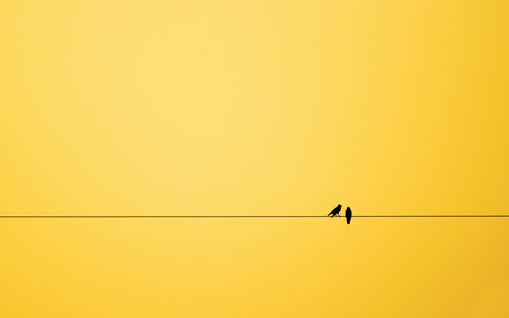 18260010-r3l8t8d-1000-minimalism-birds-background