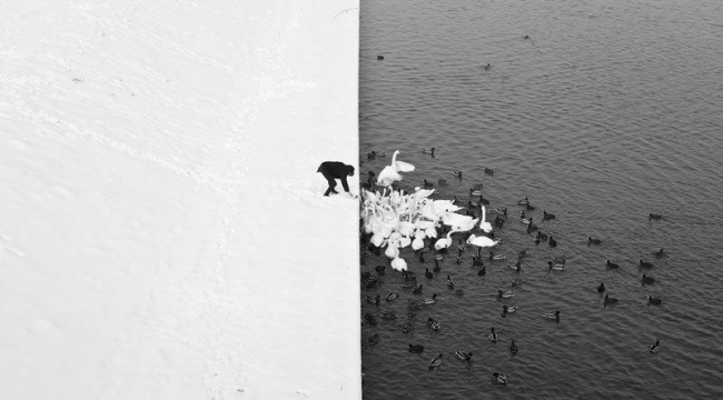 18484910-R3L8T8D-650-winter-contrast-in-krakow-poland-black-and-white