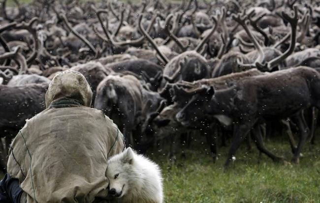 Старый пастух и его помощник