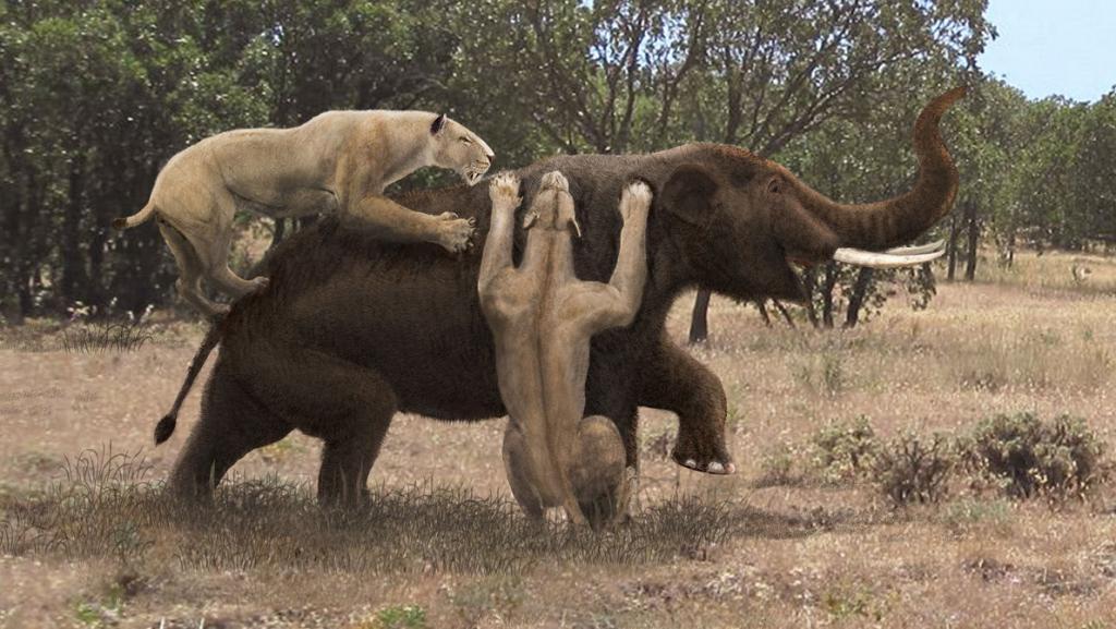 Гигантский гиенодонтид, который обитал в раннем и среднем миоцене (20-15 млн. л.н.). Считается одним из наиболее крупных когда-либо существовавших сухопутных млекопитающих-хищников. Его окаменелые остатки найдены в Восточной и Северо Восточной Африке и в Южной Азии. Длина тела с головой составляла около 4 м + длина хвоста предположительно 1,6 м, высота в холке до 2 м. Вес мегистотерия оценивается 880—1400 кг.