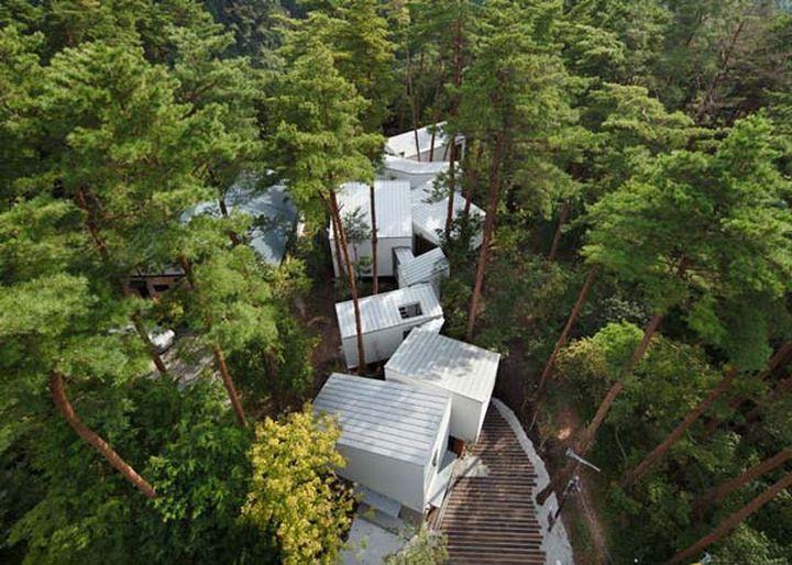Вместо того, чтобы вырубить лес, дизайнеры ловко поместили постройки между вековыми деревьями.