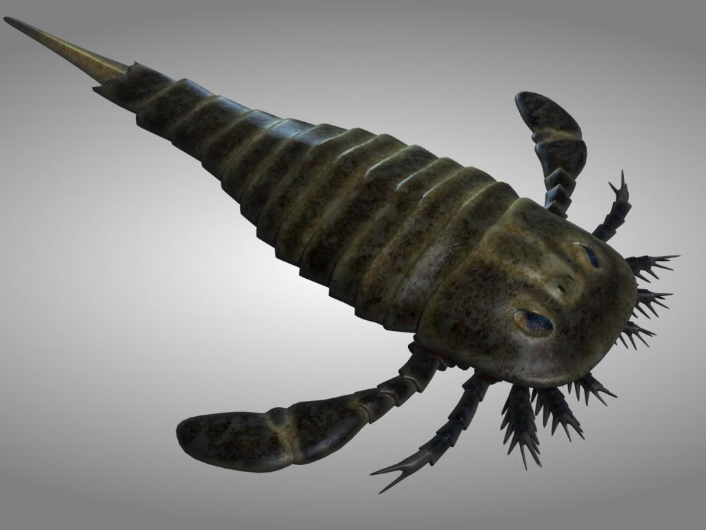 Это гигантское морское существо выглядело как некая помесь скорпиона и омара с сужающимся хвостом и плоскими плавниками. Ракоскорпионы, хоть и похожи на современных скорпионов, всё же относятся другому виду: эвриптериды. Они жили на земле в течение многих миллионов лет, но всё же вымерли в конце Пермского периода. Ранние формы обитали на мелководье в морях. Около 325—299 млн. лет назад большая часть перешла к жизни в пресной воде. В эту группу входили особи, которые считаются крупнейшими членистоногими в истории планеты. Длина тела таких существ достигала двух с половиной метров.