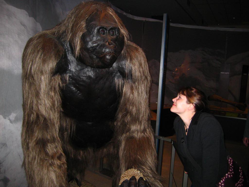Его имя говорит само за себя. Это была громадная обезьяна, родственник орангутана, которая жила в бамбуковых зарослях, джунглях и горах Китая, Индии и Вьетнама во время плейстоцена. Гигантопитеки вырастали до 3 м и весили до 550 кг! Они были очень сильны, что было им на руку в защите от хищников. Гигантопитеки вымерли 300000 лет назад, скорее всего из-за охоты ранних людей или из-за изменения климата. Конечно, всем любителям снежного человека нравится думать, что гигантопитеки как-то выжили в отдаленных частях Гималаев и что надежда его увидеть еще есть.