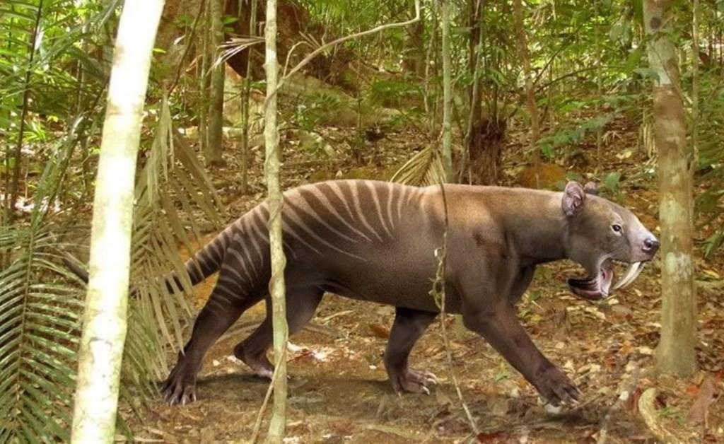 Хищное сумчатое животное отряда Sparassodonta, обитавшее в миоцене (10 млн. лет назад). Достигал размеров ягуара. На черепе хорошо видны верхние клыки постоянно растущие, с огромными корнями, продолжающимися в лобную область и длинные защитные «лопасти» на нижней челюсти. Верхние резцы отсутствуют. Охотился, вероятно, на крупных травоядных. Тилакосмила часто называют сумчатым тигром, по аналогии с другим грозным хищником — сумчатым львом. Вымер в конце плиоцена, не выдержав конкуренции с заселившими континент первыми саблезубыми кошками.