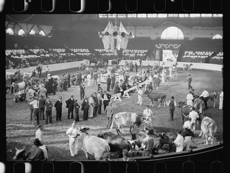Ярмарка крупного рогатого скота. Спрингфилд, штат Массачусетс. Сентябрь 1936 года.