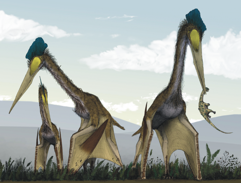 Это существо называют одним из самых крупных, если не самым крупных из всех, кто когда-либо бороздил небесные просторы. Название его связано с ацтекским богом Кетцалькоатлем, который был известен в виде пернатого змея. Летающее существо жило в позднем меловом периоде. Это был самый настоящий король неба, с размахом крыльев в 12 метров и ростом почти в 10. Однако вес был довольно невелик — до центнера, благодаря полым костям. У существа был заостренный клюв, которым оно собирало пищу. Длинным челюстям не мешало отсутствие зубов, а основной едой могли быть рыба, трупы других динозавров. Впервые окаменелости были обнаружены в парке Биг-Бенд, в Техасе в 1971 году. Считается, что, находясь на земле, четвероногое животное было настолько сильным, что могло взлетать прямо с места, без разбега. Сравнивать это огромное животное с современными, конечно же, трудно. Так как оно являлось птерозавром, прямых потомков у него не осталось. Но в свое время он был наиболее связан с птеранодоном, который уже сравним с современными птицами, в частности с аистом марабу. Сближают их два факта — больший, чем обычно размах крыльев и пристрастие к падали в качестве пищи.