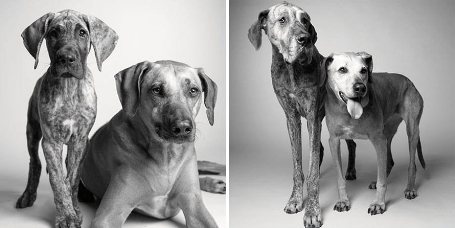 Кейден и Броуди — 11 месяцев и 5 лет; 7 лет и 12 лет