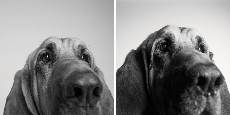 Купер — 3 года и 10 лет