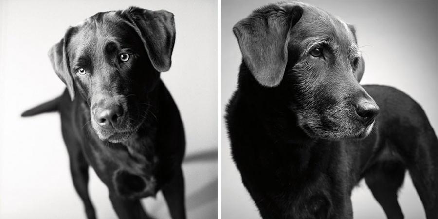 Корбет — 2 года и 11 лет