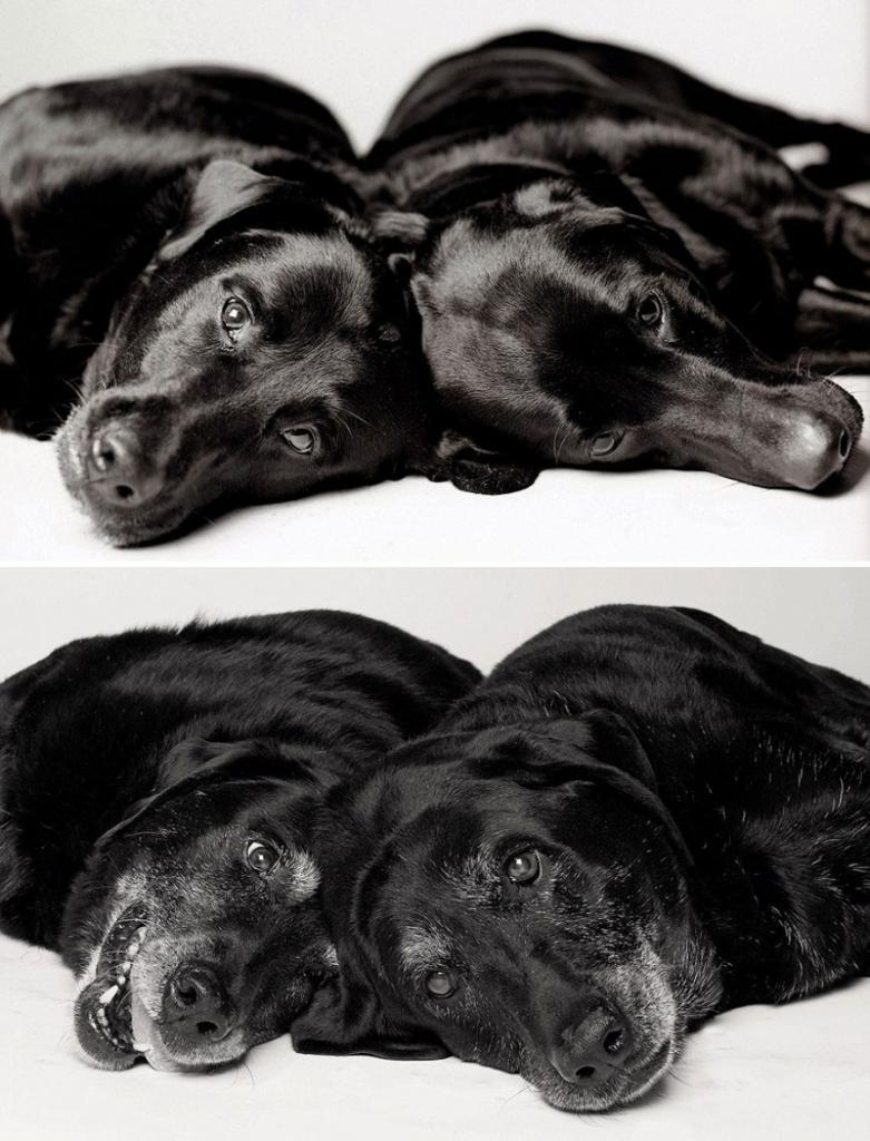 Мэдди и Элли — 7 и 6 лет; 14 и 13 лет