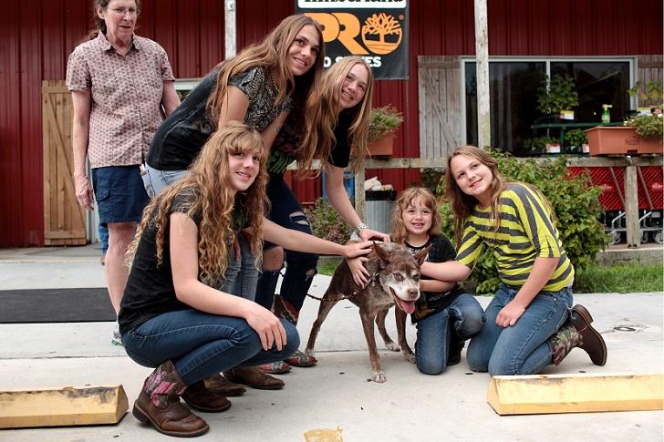 hunchback-dog-quasi-modo-wins-worlds-ugliest-dog-competition-loxahatchee-florida-america-06-jul-2015-8