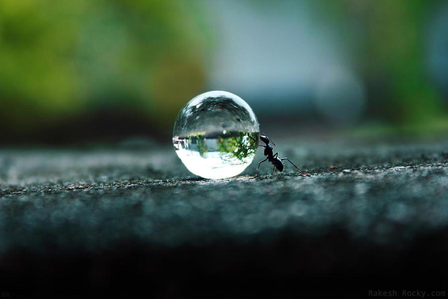 Мечта муравья