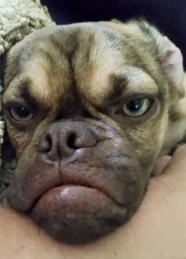 GrumpyDog05