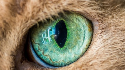Фантастические макроснимки кошачьих глаз