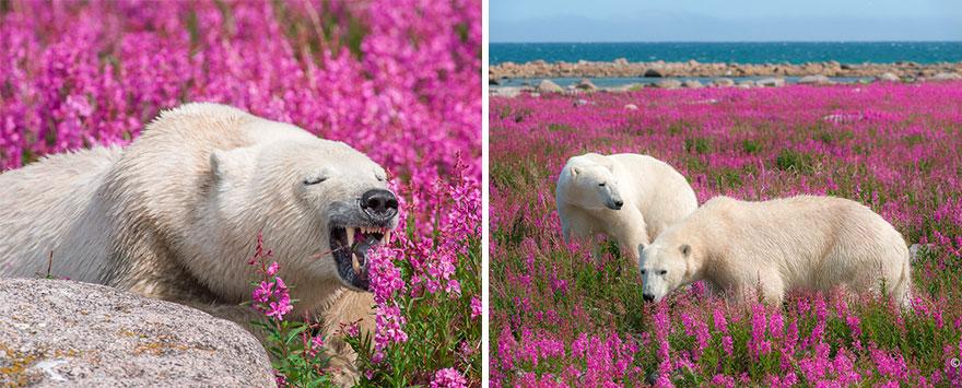 6. Я люблю зверей белого цвета: белых медведей, песцов и полярных сов.
