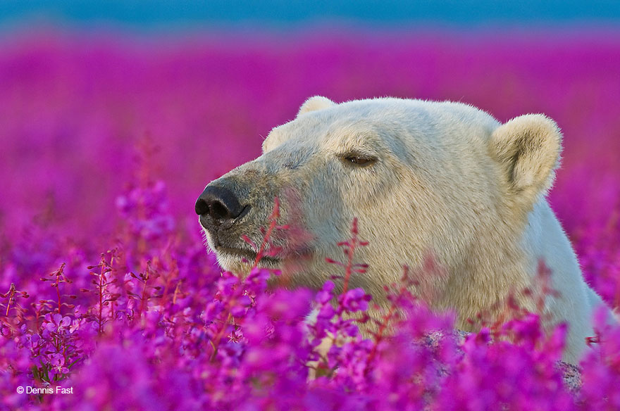 10. Надеюсь, мои фотографии вдохновят людей любить и беречь дикую природу.