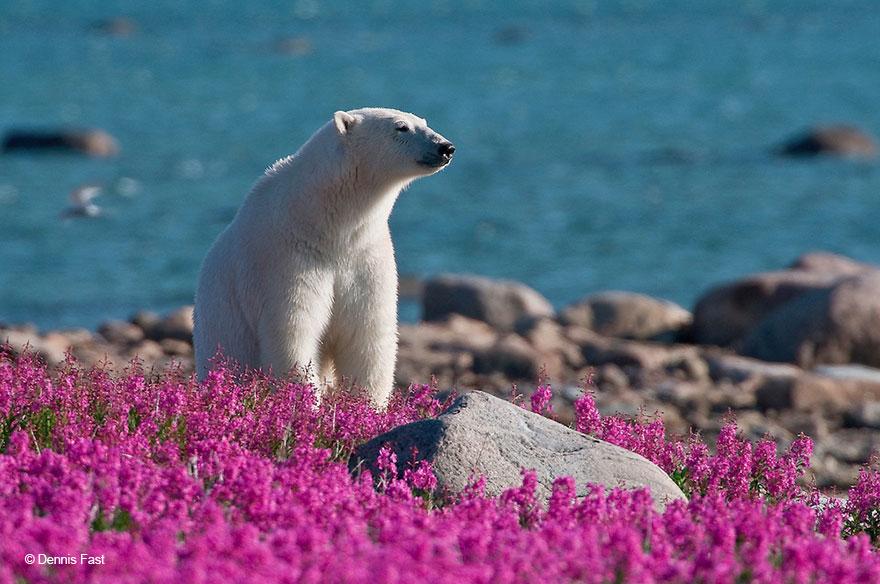 11. Лишиться белых медведей было бы невосполнимой потерей.
