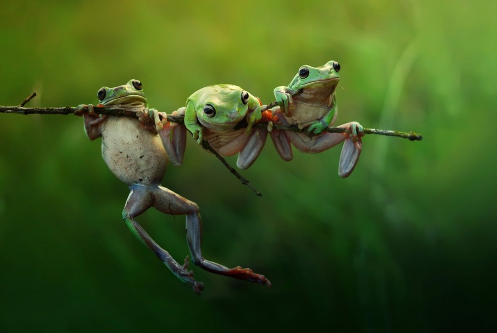 Категория: Природа. Харфиан Герди.