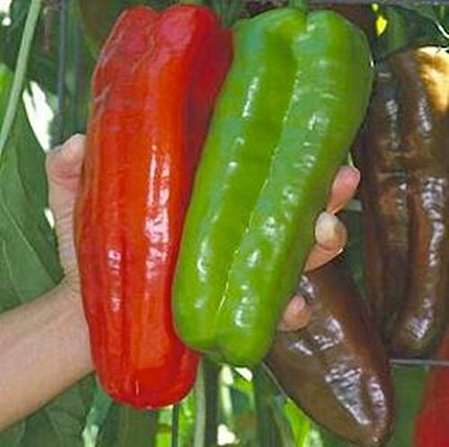 besplatnaja-dostavka-50-sht-markoni-perec-semena-gigantskij-perec-dom-sad-zavod
