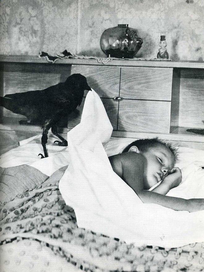 5. Заботливая ворона.