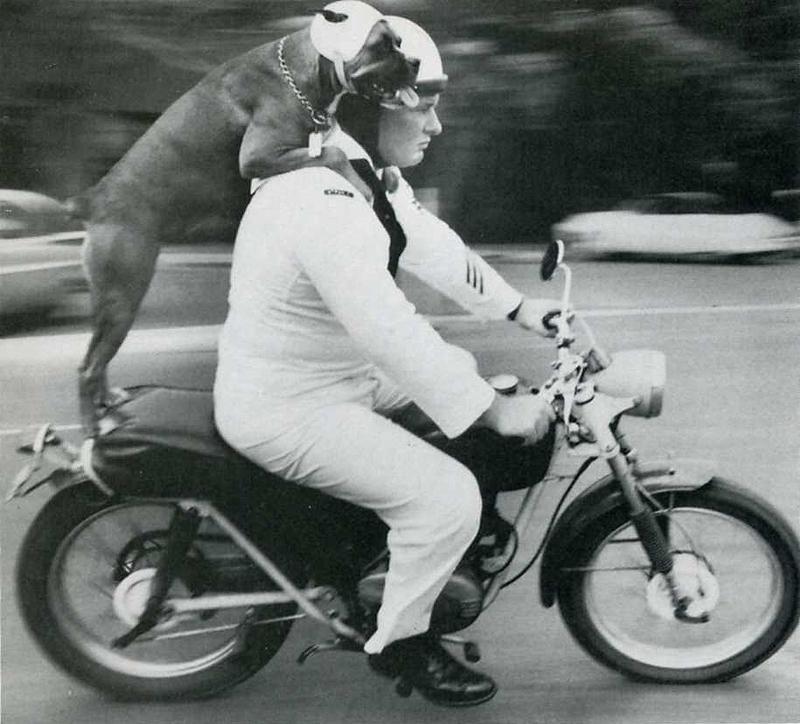15. Кэти соблюдает закон о наличии шлема на голове во время езды на мотоцикле с Франклином Дрисколлом на Гавайях.