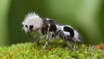 26 невероятных творений природы, доказывающих, что жизнь на этой планете удивительна