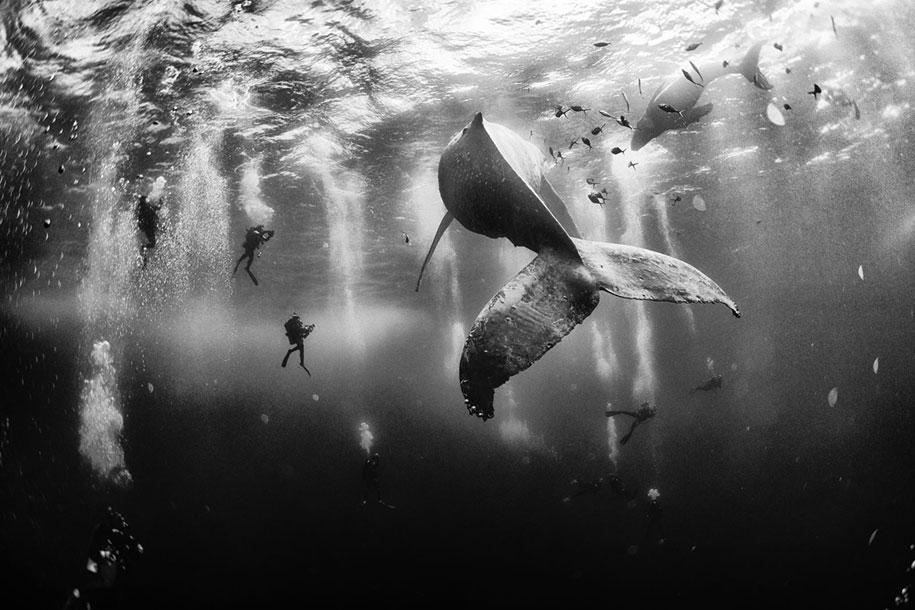 1-е место. Заклинатели китов