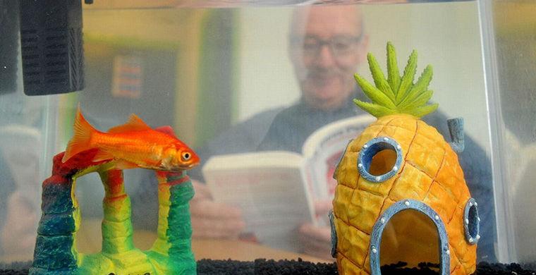 Британський готель Happy Guests Lodge в графстві Чешир подбав про тих, хто потребує спілкування: він надає в оренду золотих рибок - по 5 фунтів (430 рублів) за штуку на добу.  Власник Джефф Райлі стверджує, що послуга користується великим успіхом, і після публікацій у світових ЗМІ називає своїх вихованців «всесвітньо відомими».  «Багато наших гості проводять багато днів далеко від дому, - пояснює він.  - Той, хто подорожує без компанії, може страждати від самотності, а рибка дає їм безумовну любов, з нею можна поговорити і висловити все, що накопичилося після важкого дня ».