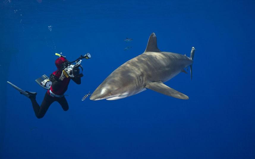 Дуг Перрин фотографирует длиннокрылую акулу у побережья Большого острова, Гавайи. (David Fleetham/Bluegreen / Rex Features)