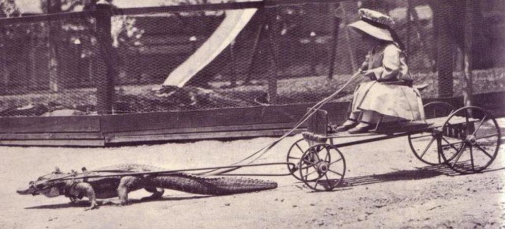 Суровое американское детство. Девочка использует крокодила вместо лошадки. США. конец 19 века.