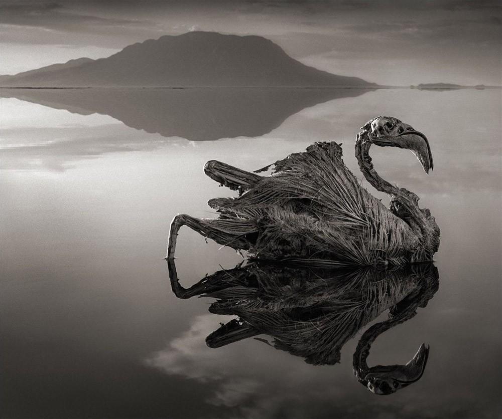 Щелочность озера колеблется в пределах 9–10,5 pH, а температура воды достигает 60 °C, поэтому животные (в основном птицы), попадая в озеро, немедленно погибают, а их останки покрываются минеральными веществами и затвердевают, превращаясь в каменные изваяния.