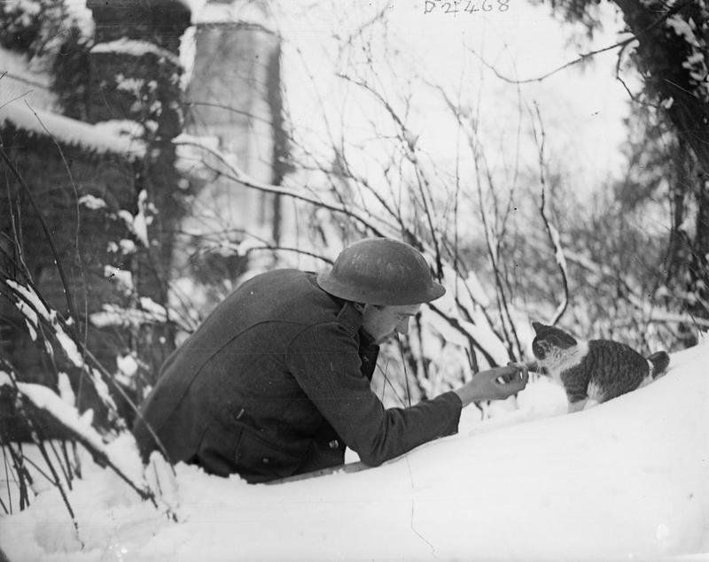 Первая мировая. Британский солдат братается с кошкой. Франция. 1917 год.